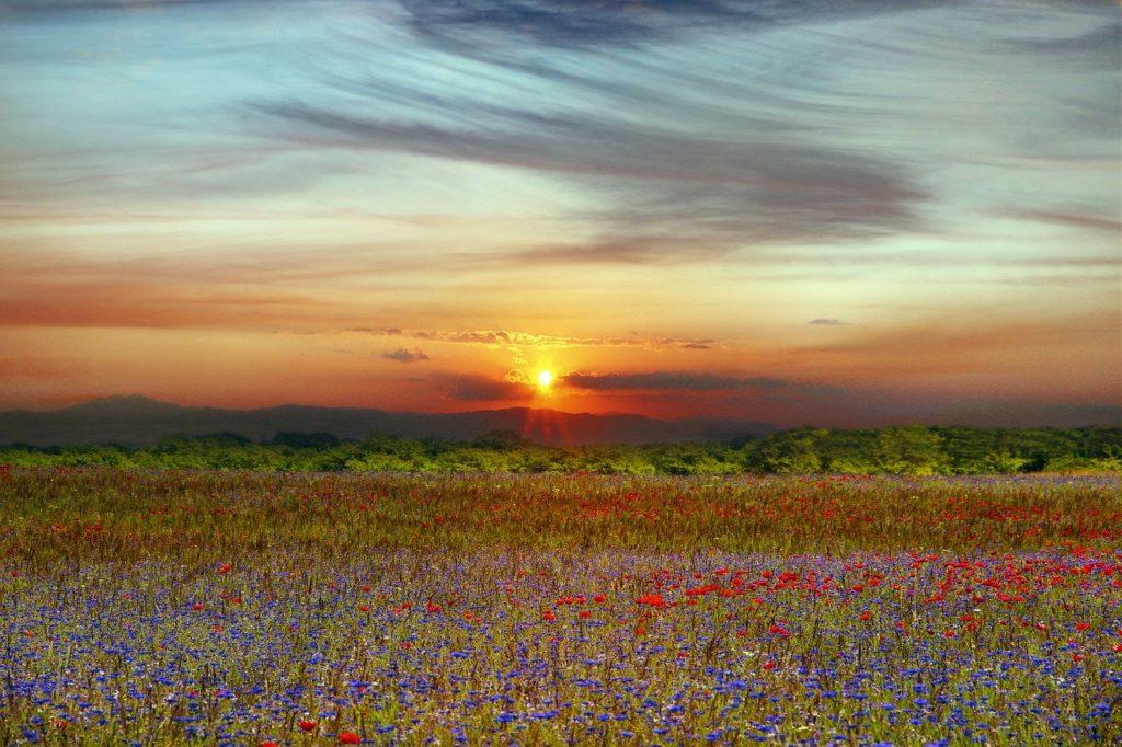 landscape, prado, flowers